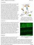 Cerebellum - Page 5