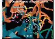Enzymology2 chem nature.pdf