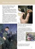 Hvorfor ringmærkes fugle? - Zoologisk Museum - Page 6