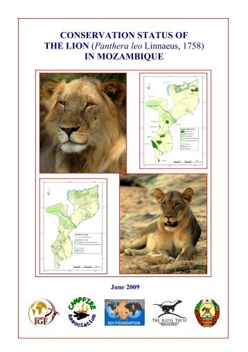 CONSERVATION STATUS OF THE LION ... - Shakari Connection