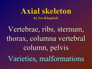 Axial skeleton
