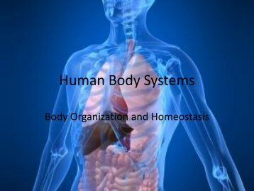 Human Body Systems - Fall River Public Schools