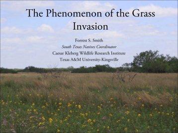 The Phenomenon of the Grass Invasion - Caesar Kleberg Wildlife ...