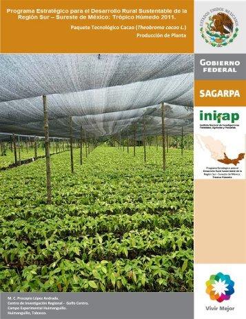 Cacao Producción de la Planta