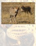 The Northern Tuli Predator Project - Page 4