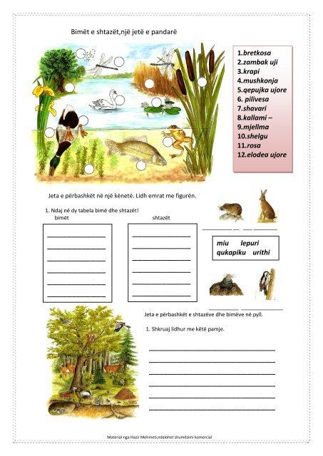 Bimët e shtazët 1-3 (Mag. Hazir Mehmeti) (pdf, 678 KB)