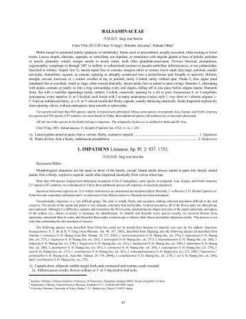 BALSAMINACEAE 1. IMPATIENS Linnaeus, Sp. Pl. 2: 937. 1753.