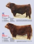 SKOR Simmental Bull Sale - Transcon Livestock Corporation - Page 7