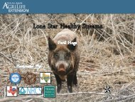 Feral Hog - Lone Star Healthy Streams Program
