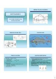 Anatomie, morfologie a fyziologie ryb - KZR