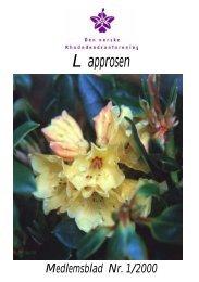 Noen nyheter våren 2000 - Den norske Rhododendronforening