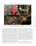 Myco-heterotrophy: when fungi host plants - Page 2