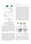 View - Departamento de Biología Molecular y Bioquímica - Page 4