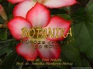 presnimi/download PDF file - hirc.botanic.hr, Department of Botany ...