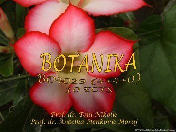 presnimi/download PDF file - hirc.botanic.hr, Department of Botany ...