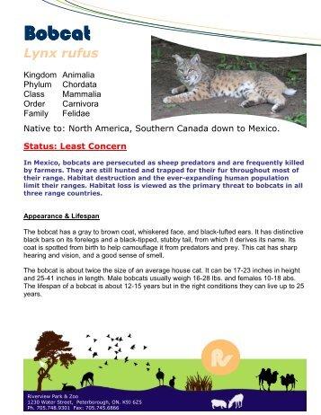 Bobcat - Peterborough Utilities