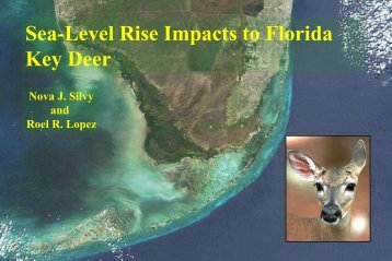 Population estimates of Key deer