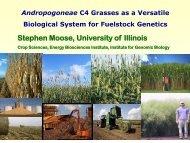 presentation - pdf - Center for Advanced BioEnergy Research