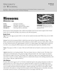 Wireworms: Melanotus spp.
