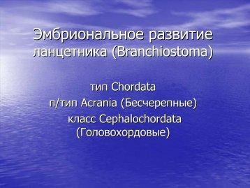 Развитие Бесчерепных (Acrania).
