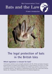 Bats and the Law - The Churches Conservation Trust