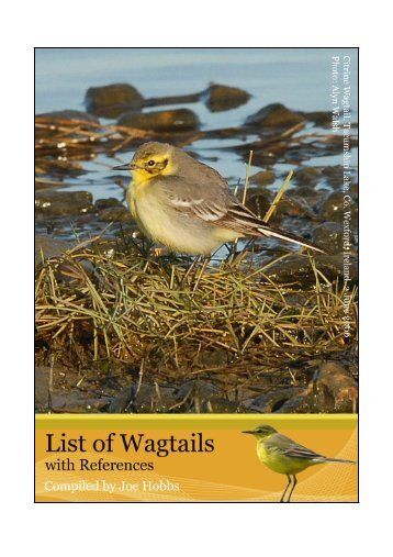 Wagtail references - Dutch Birding