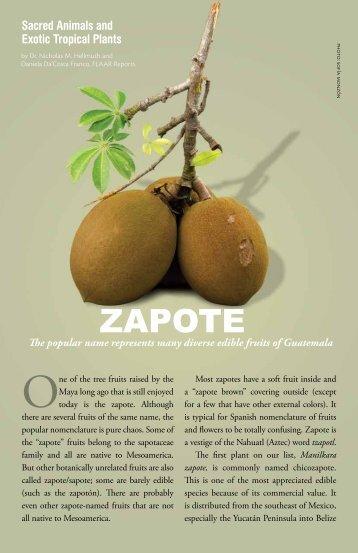 ZAPOTE - Maya Archaeology