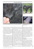Doggy-Rapport nr 4-08.qxd - Page 5
