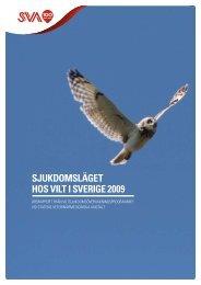 Sjukdomsläget hos vilt i Sverige 2009 (pdf) - SVA