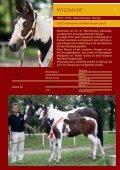 Download Verkaufspferdekatalog 2013 - Zucht- und ... - Seite 7