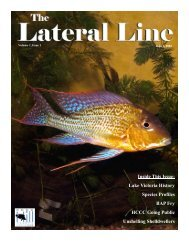 Lateral Line June 2004-1.pub - Hill Country Cichlid Club