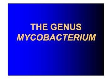 THE GENUS MYCOBACTERIUM