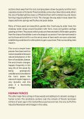 Lloyds Coppice, Ironbridge Gorge - Severn Gorge Countryside Trust - Page 3