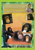 The Story About Hand-raising A Baby Chimpanzee - Zoo Negara - Page 3
