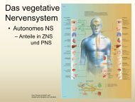 (vegetative) Nervensystem