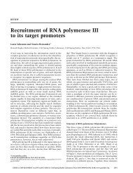 Recruitment of RNA polymerase III to its target promoters - Genes ...