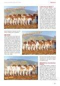 swissherdbook bulletin 1-2012-2-f - Page 4