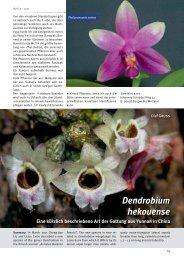Dendrobium hekouense Eine kürzlich beschriebene Art der Gattung ...