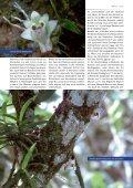Dendrobium hekouense Eine kürzlich beschriebene Art der Gattung ... - Seite 2