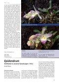 Dendrobium hekouense Eine kürzlich beschriebene Art der Gattung ... - Seite 3