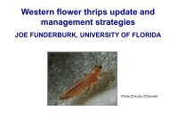 Western Flower Thrips Situation in South Florida and Management ...