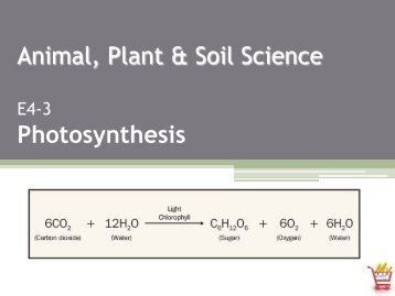 Animal, Plant & Soil Science Photosynthesis