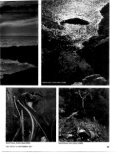 Edward Weston - Page 4