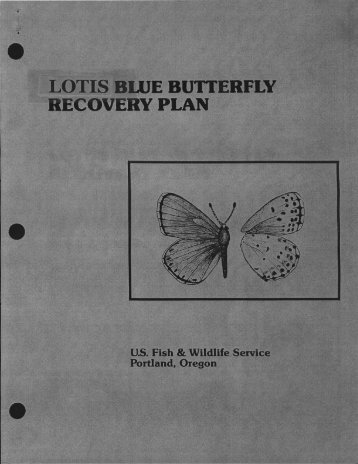 Lotis Blue Butterfly Recovery Plan - U.S. Fish and Wildlife Service