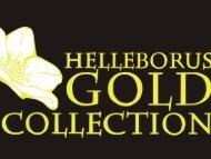 HGC Helleborus