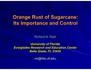 Orange Rust of Sugarcane: Its Importance and Control - CEDAF