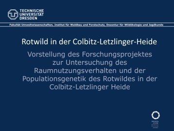 Rotwild in der Colbitz-Letzlinger-Heide