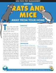 Rats and Mice - Our Water Our World