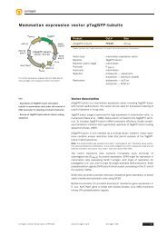 Data Sheet - Evrogen