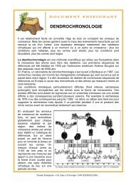 Fiche dendrochronologie en n°3 - Cap Sciences